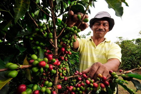 Colombia necesita recuperar a los cafeteros colombianos que fueron uno de sus pilares la década pasada. Foto: CIAT International Center for Tropical Agriculture via photopin cc
